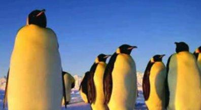 Les manchots de Linux